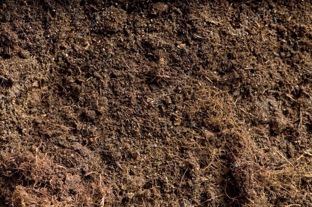 Подготовка почвы под рассаду болгарского перца