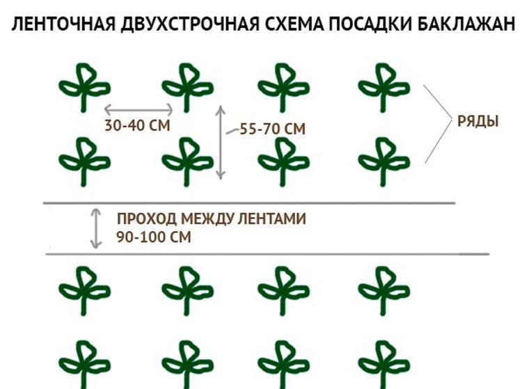 Схема посадки баклажанов в теплице