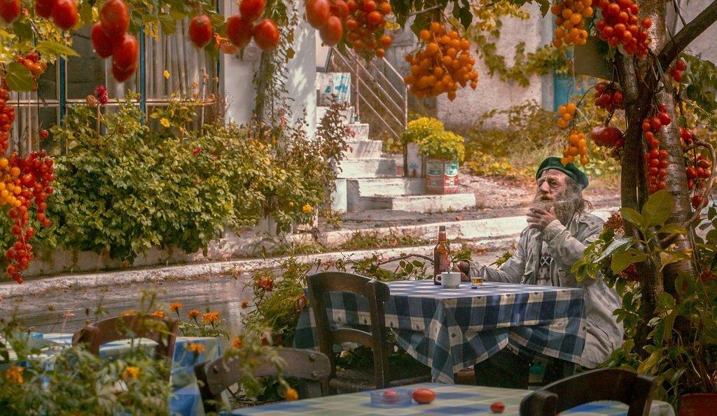 Выбор места для посадки рассады томатов