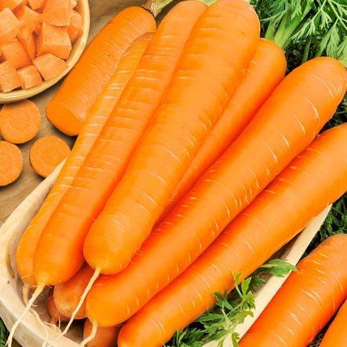 Морковь Престо F1
