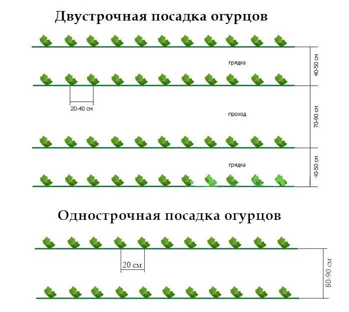 При посадке огурцов в открытый грунт придерживайтесь следующих схем посева: